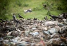 The plague of plastic In Europe, Illegal Dumping Have Become Common